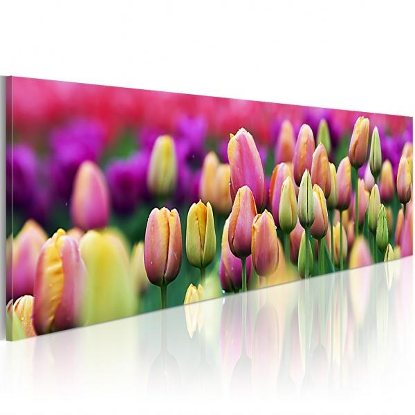Obraz - Tęczowe tulipany (120x40 cm) A0-N1241