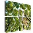 Obraz - Treetops A0-N1993