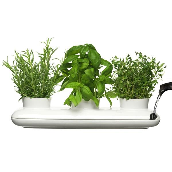 Potrójny wazon na zioła Sagaform Herbs & Spices SF-5015274
